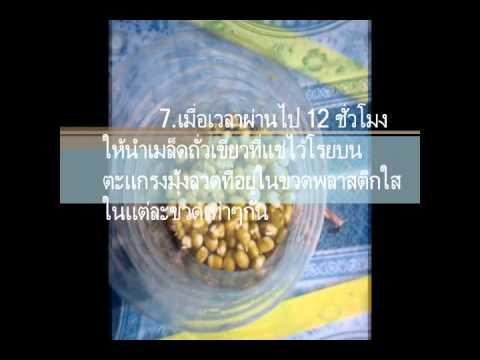 ประสิทธิภาพของน้ำผัก ผลไม้.wmv