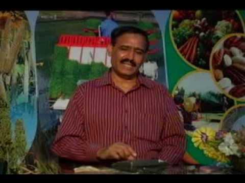 Poultry mein chichar aur juen control Dr.Ashraf Sahibzada
