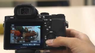 Налаштування ISO у камерах SONY Alpha. Моделі SLT, DSLR, A7, A7R.