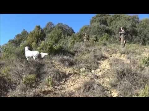 caza de perdices y faisanes