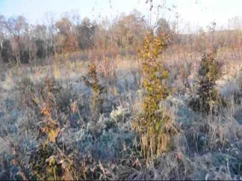 Buck Hunting In Bucks County