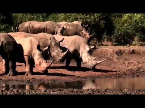 Rhino: South African Government efforts to combat poaching and conserve rhino species