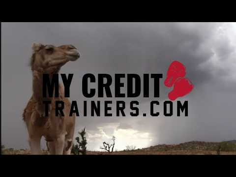 5-free-easy-ways-to-boost-your-credit-score!-even-a-camel-can-do-it.