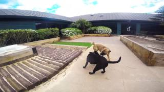 A Day In The Life Of Dogs Trust Harefield