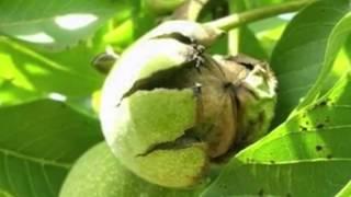 видео Вермут: виды, состав, польза и вред. Как правильно пить, сделать вермут в домашних условиях