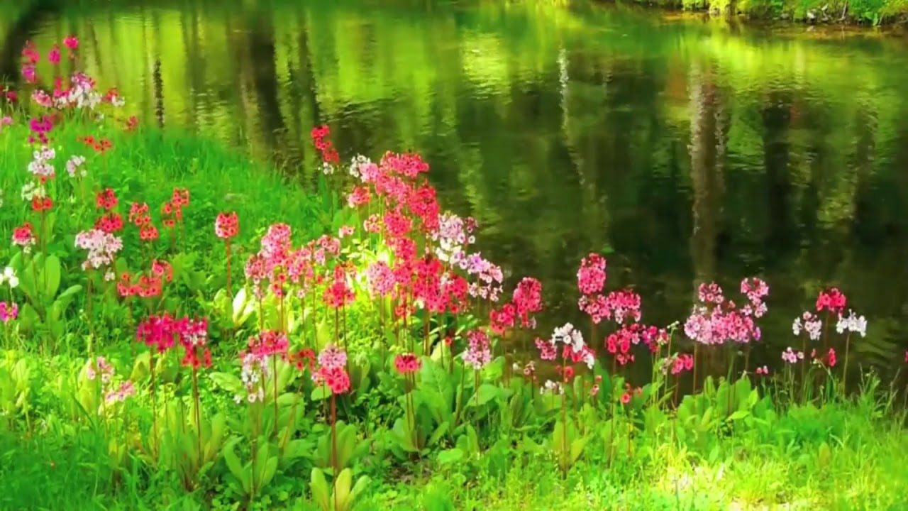Heavy Beautiful Flower Scenery In This Video 13 Born Full Hd Flowers