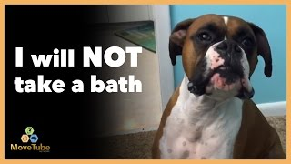 Dogs Talk Back to Owners - Funny MoveTube