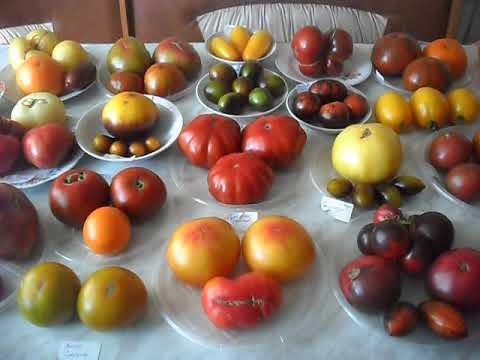 Сорта томатов на 20.07.2020 год (часть 2)