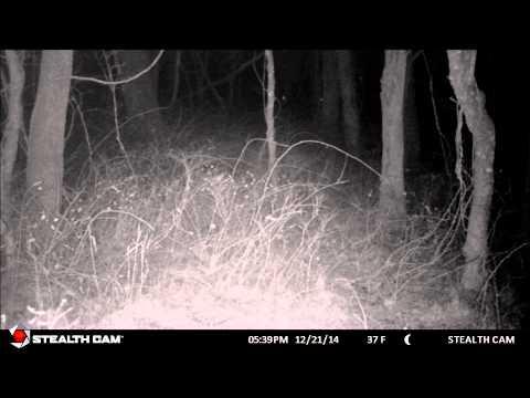 Two Trail Cam Peek-a-boos!