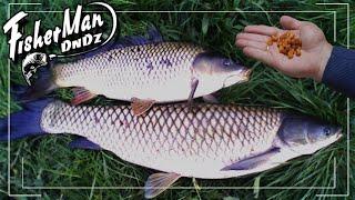 Супер Насадка по холодной воде для Рыбалки на Карпа Амура Сазана Карася