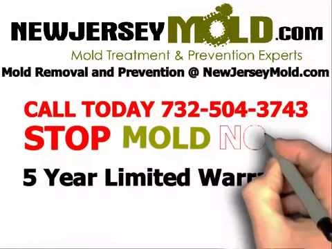 mold-remediation-nj-mold-removal:-732-504-3743-|-newjerseymold.com