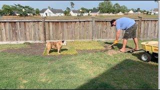 reuben-the-bulldog-landscape-supervisor