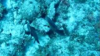 Diving 2012 Cayo Largo CUBA