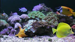 🎧  Aquarium Blues - Relaxation Screensaver  4 Hours