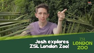 Josh explores ZSL London Zoo!