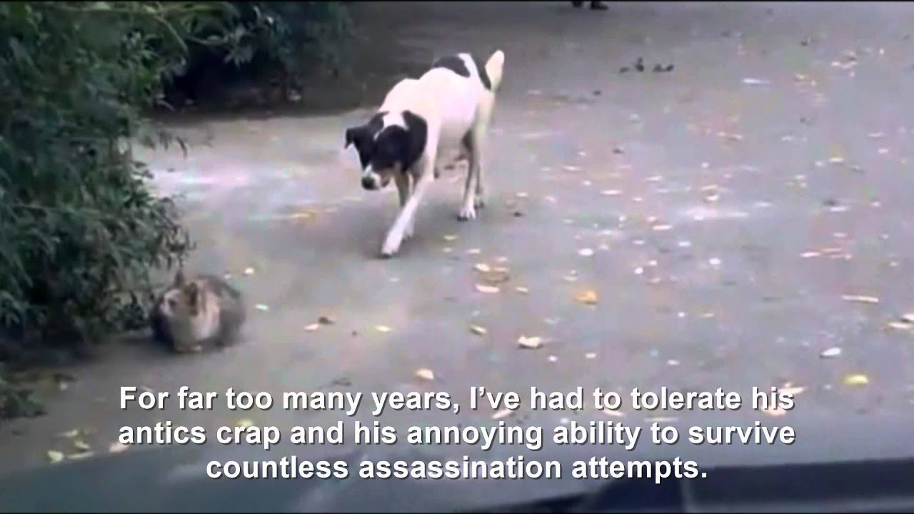 Hitler Dog sneaks up on Fegelein Cat