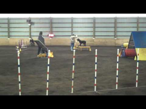 Christine and Monty in their first excellent standard preferred run