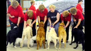 Ann Gafke On How To Train A Therapy Dog