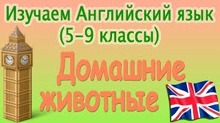 Домашние животные. Урок 1. Видеокурс английского языка (5-9 классы)