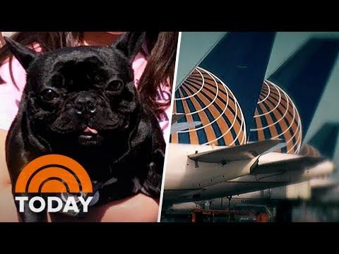 Dog's Death On United Flight Spurs New Questions And Growing Outrage | TODAY