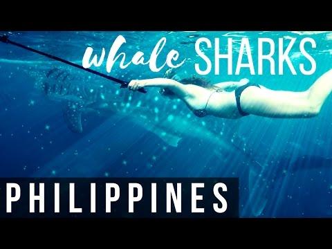 SWIMMING WITH WHALESHARKS & TUMALOG FALLS | PHILIPPINES