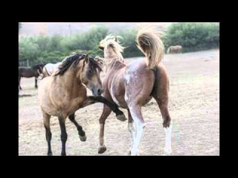 Wild Horses at Return to Freedom
