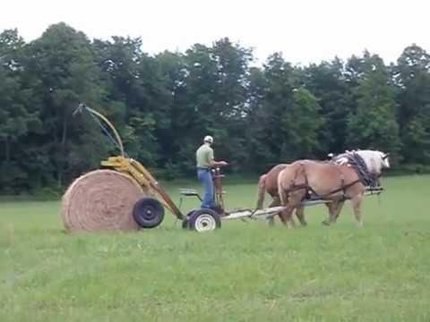Фото конной фермы