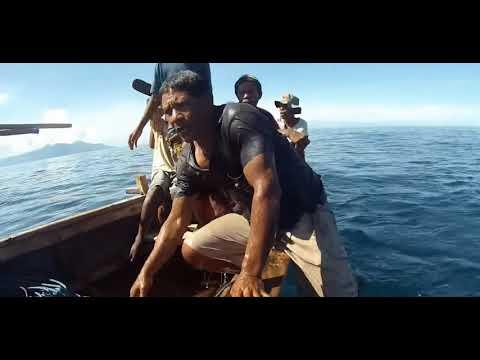 Whale Hunters - Sea Life