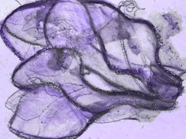 Livre d'artiste - lauriers larvaires.wmv
