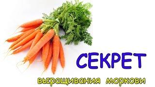Секрет выращивания моркови. Как вырастить отличную морковь?(Подписывайтесь на канал