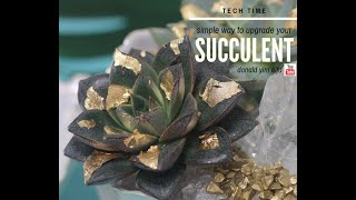 HOW TO  | UPGRADE YOUR SUCCULENT | TECH TIME