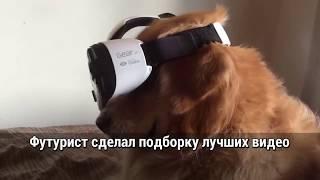 Животные в Виртуальной реальности. Подборка| FUTURIST