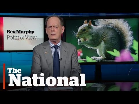 The Trial of the Century? | Rex Murphy