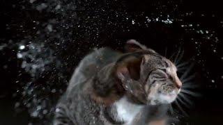 Кошки в слоу мо. Замедленная съемка котов
