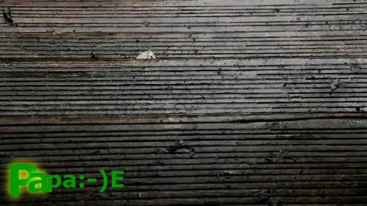 Holztreppe Putzen holztreppe reinigen algen biofilm