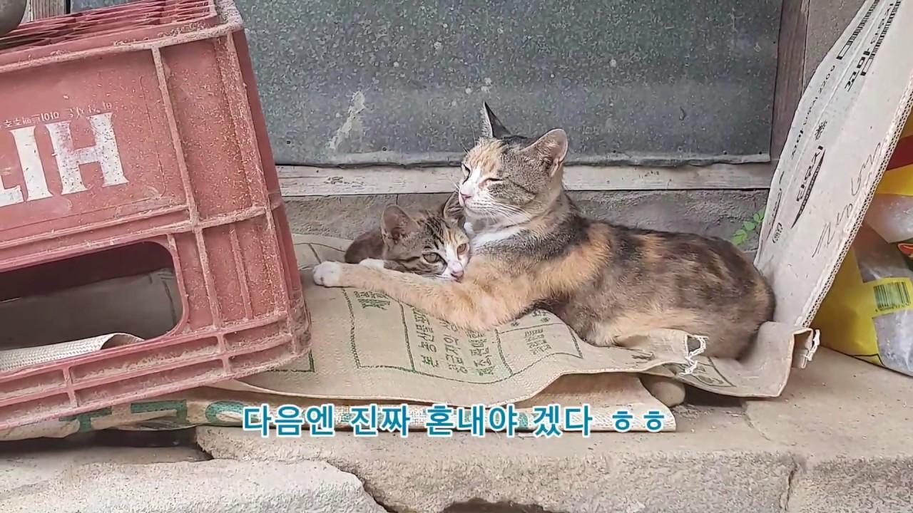 고양이를 혼낼땐 신중해야 합니다/보복주의