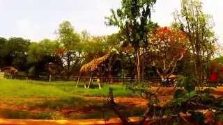 Туры в Индию. Город дворцов Майсор. City of palaces Mysore(Город дворцов - такое второе название города Майсор, ведь здесь действительно расположено большое количест..., 2014-06-30T14:26:24.000Z)