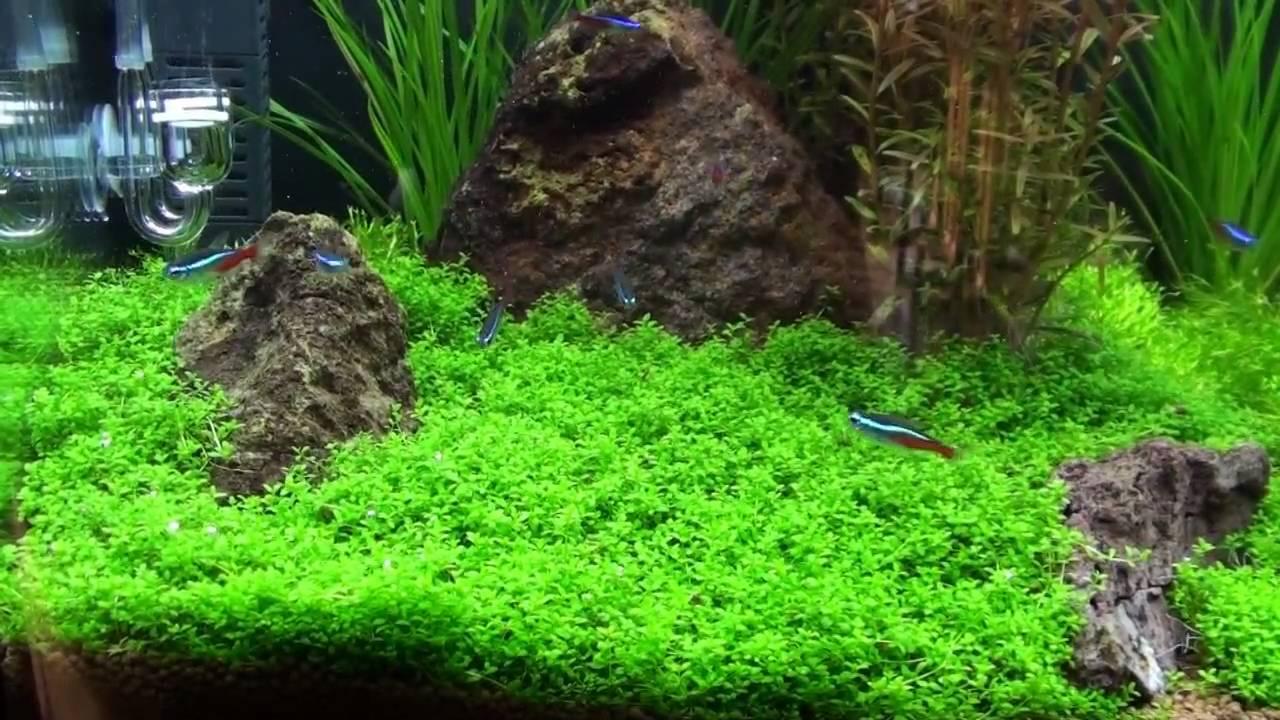 Planted Aquarium 14 Gal Biocube Youtube