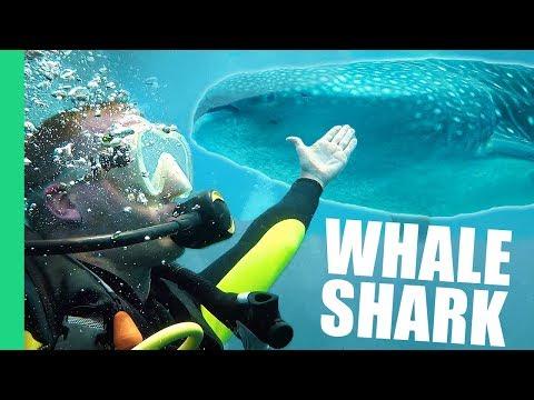 Fishing for Whale Sharks in Oslob, Cebu!