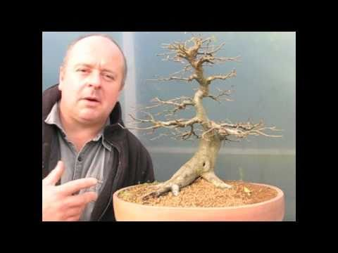 Bonsai Quick Fix Demo
