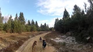 Bristol Dryland Canadian Championship  4 Dog Rig Sprint Start