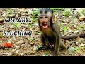 Big monkey hit new monkey Daniela, Daniela stuck Crying