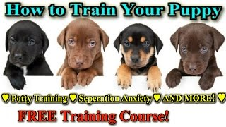 How To Train A Puppy ♫ START TODAY! ♫ Best Way To Train A Puppy ►FREE COURSE◄