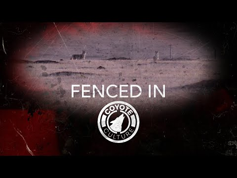 """Coyote Hunting, 2 Coyotes: CC Season 4 E16 """"Fenced In"""""""