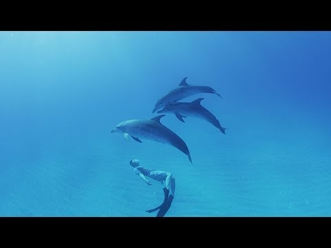 [ 4K Ultra HD ] バハマドルフィンスイミング Swimming with Wild Dolphins in Bahamas ( Shot on RED EPIC )