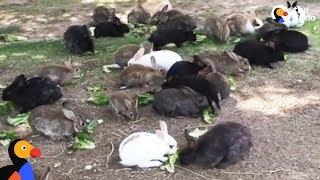 Abandoned Bunnies Dumped in Field Rescued by Woman in Las Vegas | The Dodo