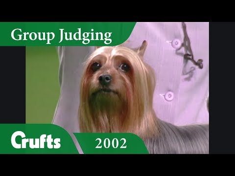 Toy Group Judging and Presentation from Crufts 2002