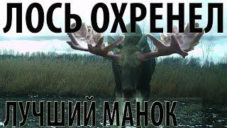 Охота на лося манком 2019