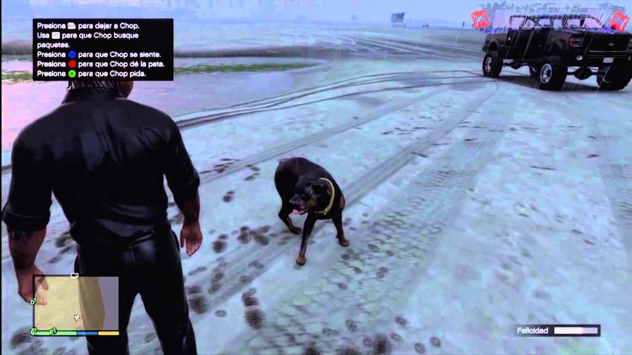 GTA V - Chop con collar Dorado y Entrenado [iFruit] - YouTube