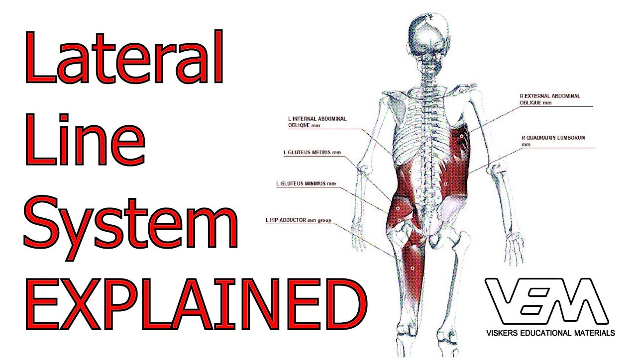 Ls Lateral Line System Youtube